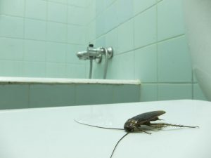 Is Your Condo Board Responsible for Pest Infestations?