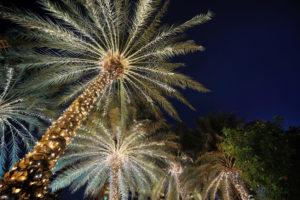 HOAs & Holiday Lighting Venice, FL