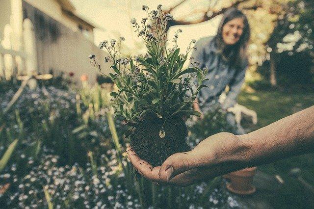 Easy Ways to Make Your HOA More Environmentally Conscious